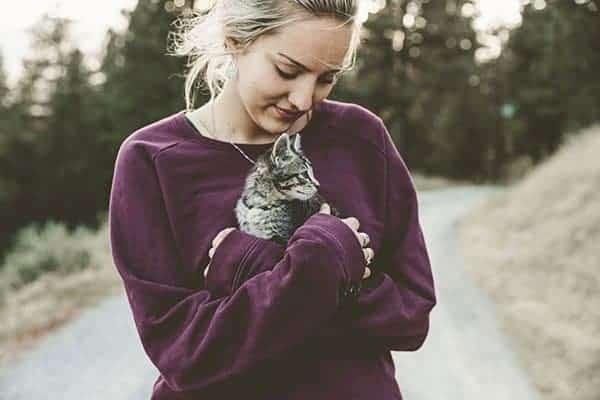 hemp-joy-pet-cbd-cat-picture