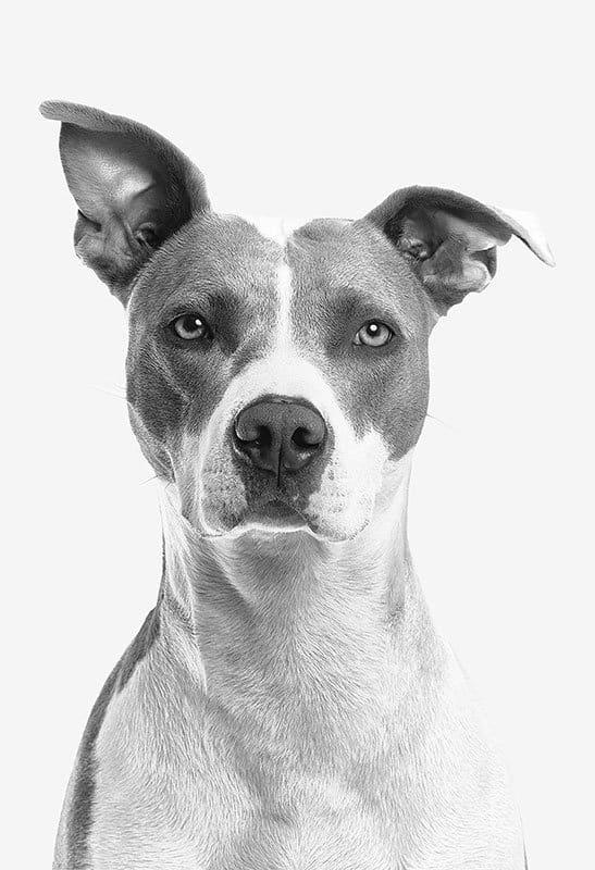 hemp-joy-pet-cbd-dog-headshot