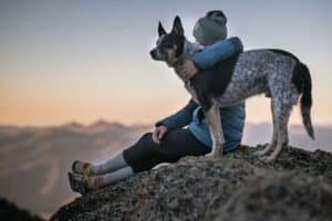 hemp-joy-pet-cbd-dog-picture