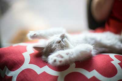 when-to-take-CBD-for-sleep-hempjoy-cat-sleeping