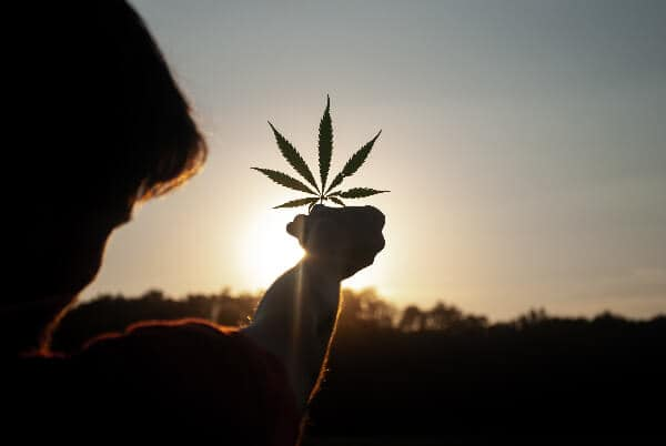 what-is-cbg-hemp-joy-man-holding-leaf